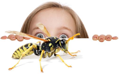 pest-control-Brisbane