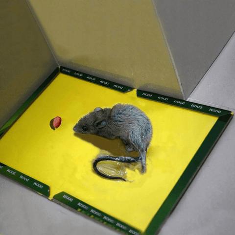 Клеевые подложки для грызунов и насекомых